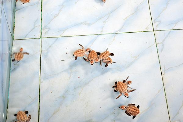 snapshot_diary_thailand5-9