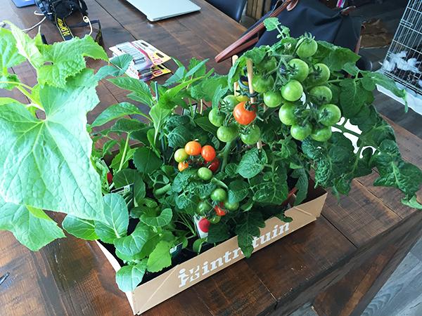 Moestuin - Groenteplantjes